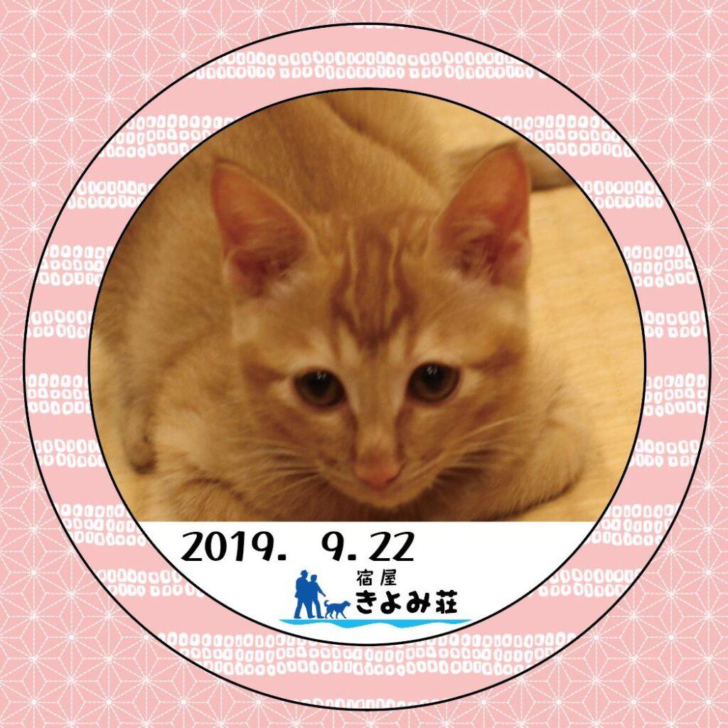 らお 猫・Mix